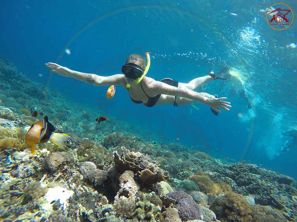 Image result for crystal bay nusa penida snorkeling