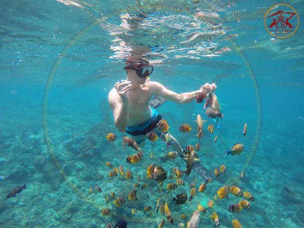 snorkeling wall bay